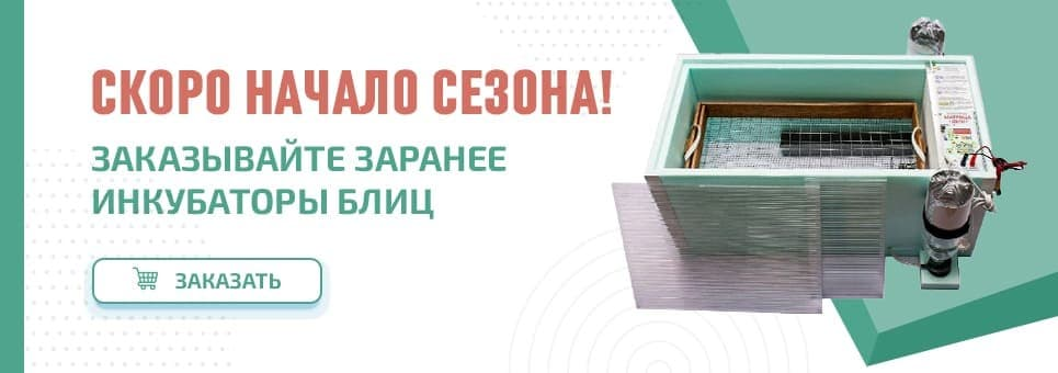 Инкубатор Блиц Матрица начало сезона